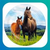 """Cavalli """"Horse and Pony"""""""